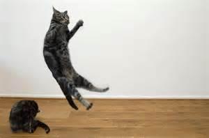 cat gymnastics cat gymnastics 7 explore de kleine rode kater s photos