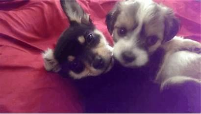 Animals Kiss Cuddling Dog Puppies Kissing Valentine