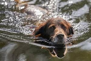 can give dog ibuprofen pain