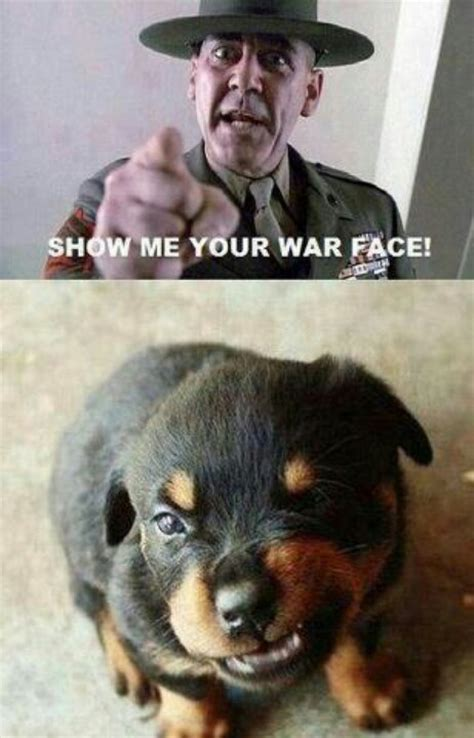 Rottweiler Memes - funny animal quotes rottweiler quotesgram