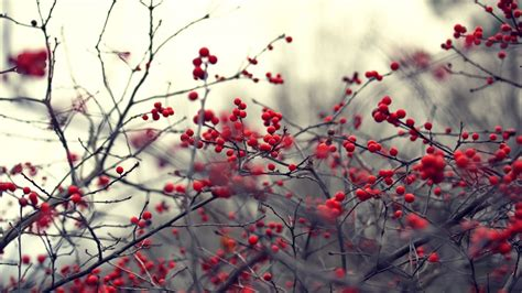 Red Berry Wallpaper