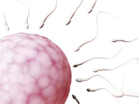 Janin Enam Bulan Fakta Mengenai Sel Telur Wanita Yang Perlu Anda Tahu