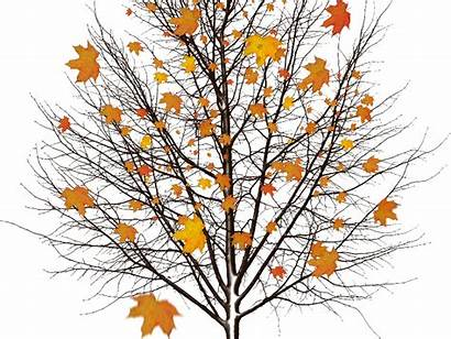 Leaves Autumn Tree Object Fall Objects Background