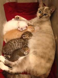 for cats to squirrels cat gives birth to litter and then lends teat to baby