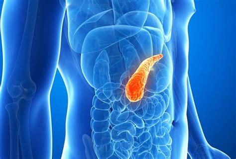 alimenti per ingrossare il pancreatite alimenti per la salute pancreas