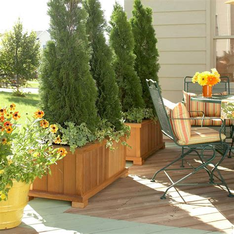5 ways to decorate your deck plant for privacy