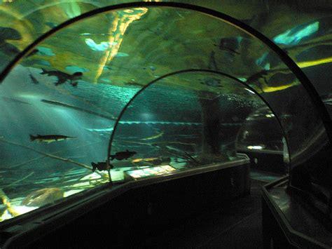 bloomington minnesota sea minnesota aquarium photo