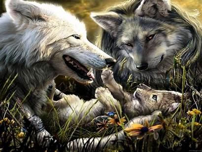 Wolves Cool Wallpapers Wolf Amazing Background Fans