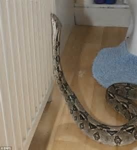 39there39s a boa constrictor in my bathroom39 horrified With snake in bathroom