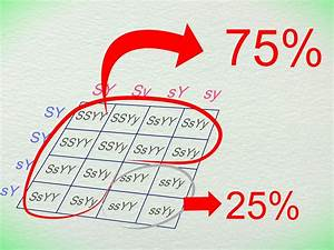 How To Work With Punnett Squares  With Pictures