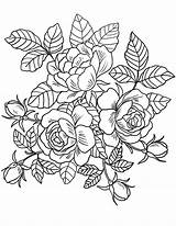 Coloring Floral Pages Adults sketch template