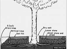 Can a big compost pile around its base kill my tree