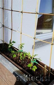 Tomaten Rankhilfe Selber Bauen : die besten 25 rankhilfe selber bauen ideen auf pinterest ger tehaus selber bauen selber ~ A.2002-acura-tl-radio.info Haus und Dekorationen