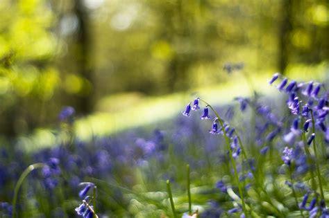spring wallpaper meadow blue - HD Desktop Wallpapers | 4k HD