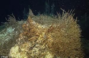 Underwater world found off Californian coast in deepest ...