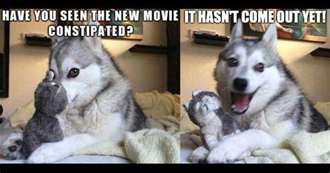 pun husky memes image memes  relatablycom