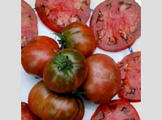 Tomato Black Sea Man · Diary of a Brussels Kitchen Garden