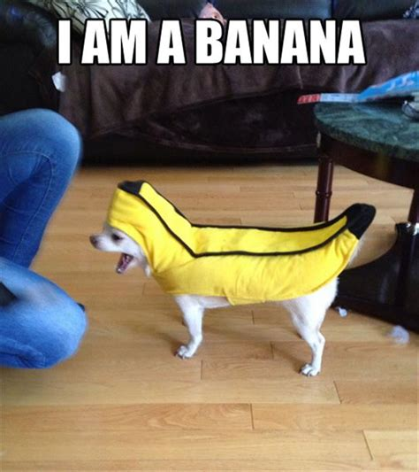 Banana Meme - i am a banana funny pictures quotes memes jokes