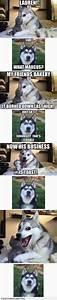 Dog jokes, Funny and Jokes on Pinterest