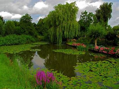 Pond Water Cleaning Park Friendly Ponds Lake