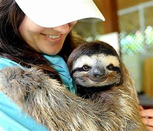 Sloth Smile | www.pixshark.com - Images Galleries With A Bite!