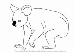 Learn How to Draw a Koala (Zoo Animals) Step by Step ...