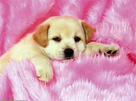Puppy Desktop Background by Puppy Wallpapers For Desktop 58 Images
