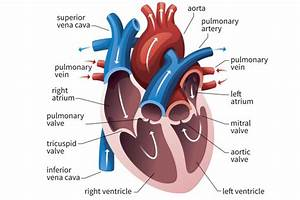 What Is The Right Ventricle