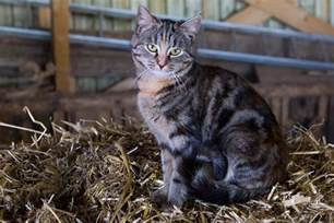 cat farm korea confirms h5n6 in cat deaths as ireland reports h5n8