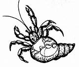 Shell Come Crab Hermit Lair Ladybug Brown sketch template