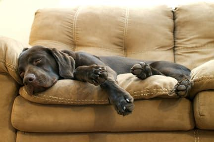 got a of couches sleep on the loveseat most higher drives than most true or