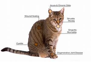 Lynx Cat Diagram