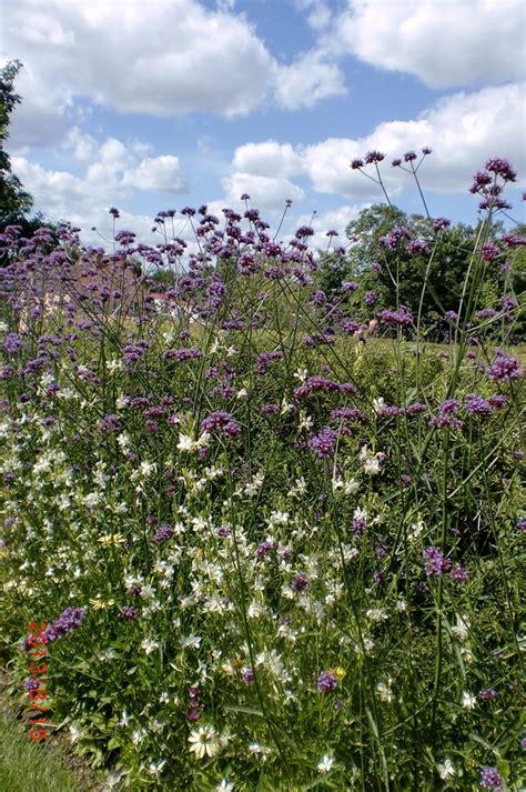 Wildblumen Im Garten by Wildblumen Im Garten Wildblumen Garten Blumenwiese