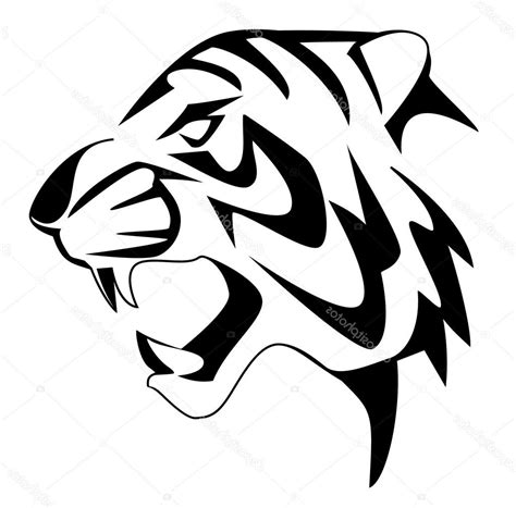 black  white tiger drawing  getdrawingscom