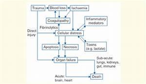 The Pathophysiology Of Hemorrhagic Shock