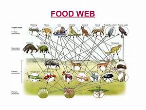 Bison Food Chain Pictures to Pin on Pinterest - PinsDaddy