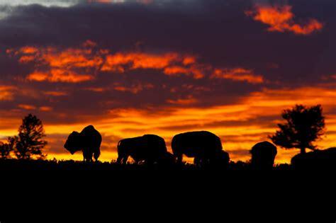 Amerikas Naturwunder 02: Yellowstone - fernsehserien.de