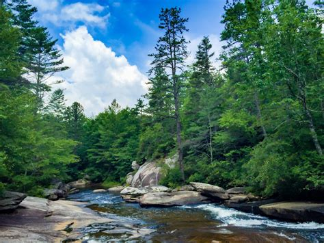 DuPont Forest - Hiking