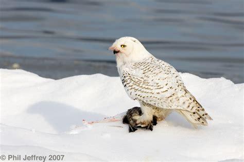 owl photos