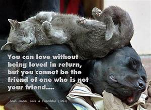 Dog And Cat Friendship Quotes