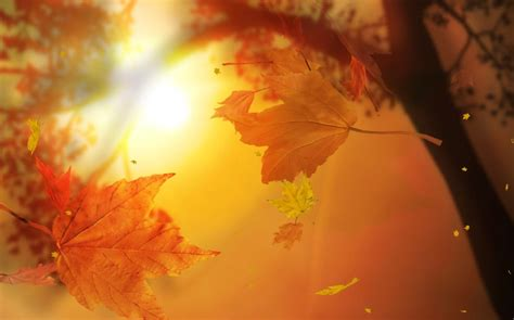 Falling Leaves Wallpaper Animated - leaf fall animated wallpaper desktopanimated