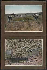Locust Plague Before and After Pics
