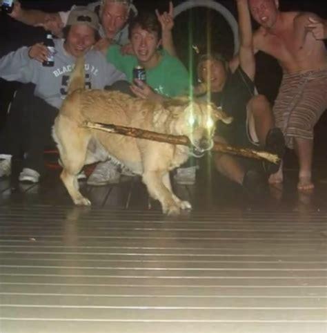 cursed dogo meme  epicuris memedroid