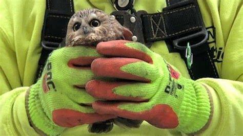 whet owl   rockefeller center christmas