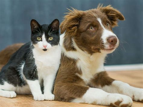 Cat And Dog Dogs Are Smarter Than Cats Study Finds Abc News