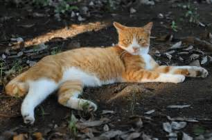Orange and White Tabby Cats