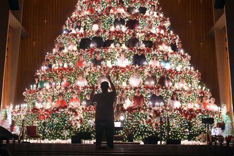 oak grove baptist s living christmas tree returns to