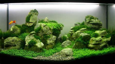 comment faire un aquarium plante le lexique de l aquascaping