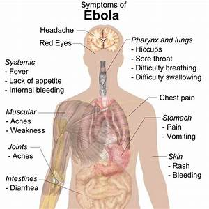 How the Ebola Virus Affects the Human Body: Learn the ...