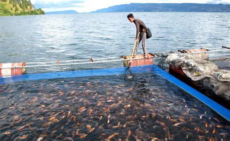 perikanan budidaya jadi sumber potensial pertumbuhan ekonomi negara monitor